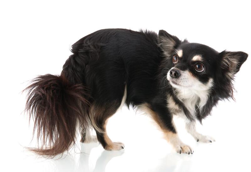 すべての犬が爪切りをできるとは限らない