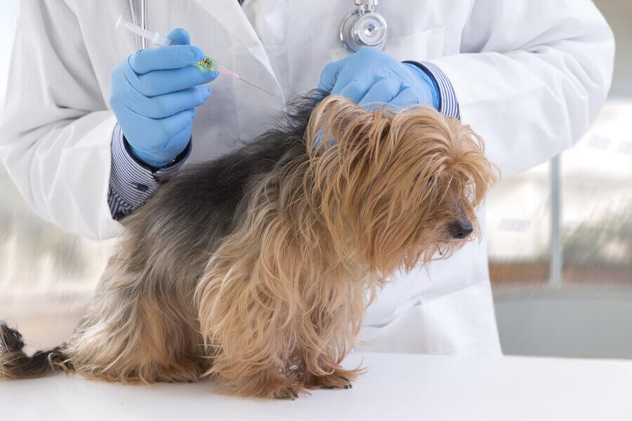 犬の混合ワクチン接種ガイド!混合ワクチンの種類や選び方