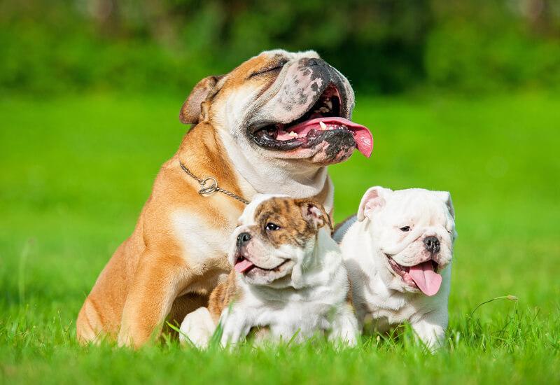 犬の年齢の数え方!犬の平均寿命はどれくらい?