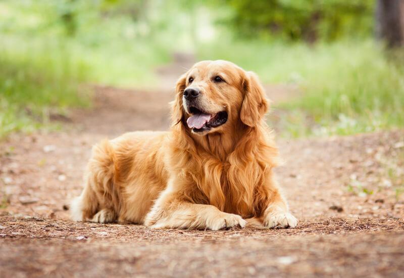 犬の平均寿命は14.19歳