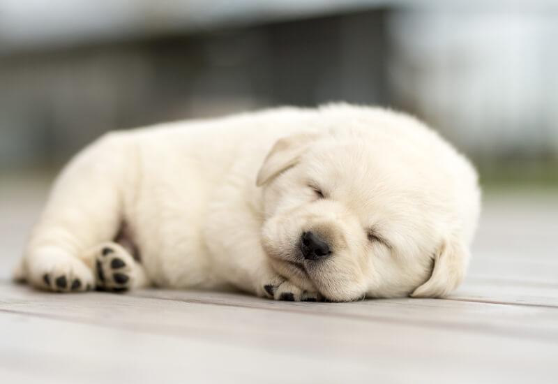 犬の成長スピードは、人間の約4倍!