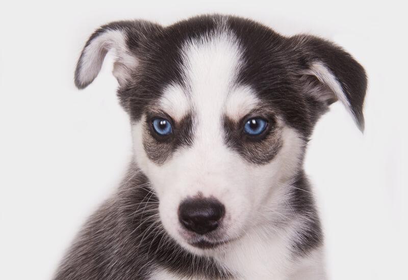 犬の目のカラーバリエーションは7種類