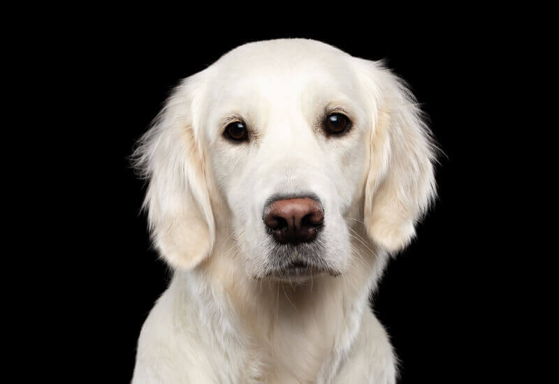 犬の目の形は大きく分けて3種類