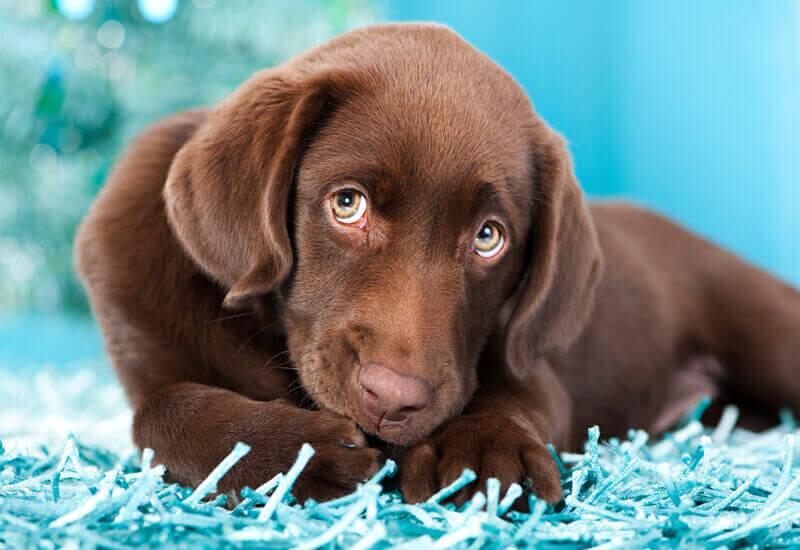 目の形は犬の感情によってそのつど変化する