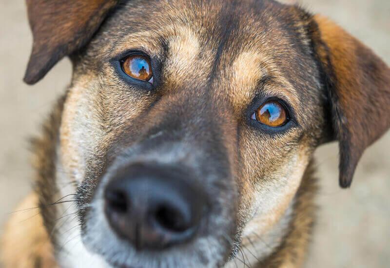 犬の目には不思議な魅力がいっぱい!