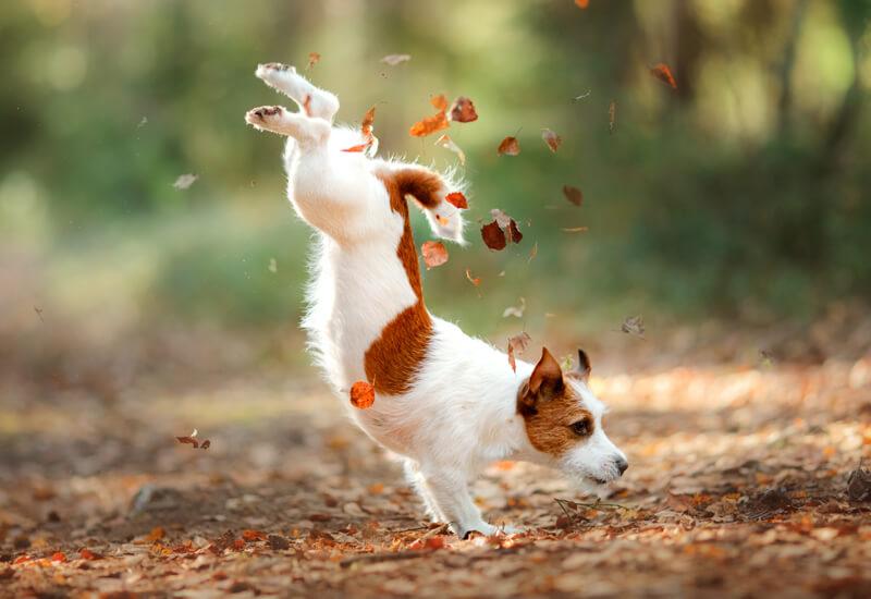 犬の肉球の役割