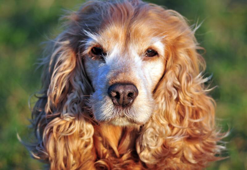 高齢犬の介護は無理せず楽しく。元気に長生きしてもらうために