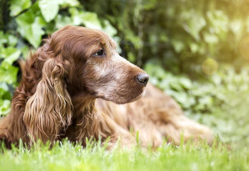 大型犬は5歳、小型犬・中型犬は7歳になる頃に準備しておく