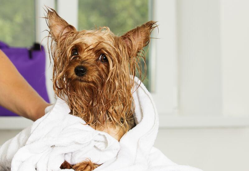 タオルドライに使うタオルは吸水性の高いものを選ぼう