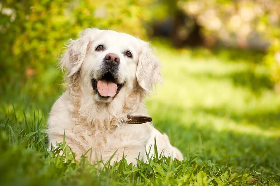 犬のよだれはストレスや病気が原因?症状や対処法とは