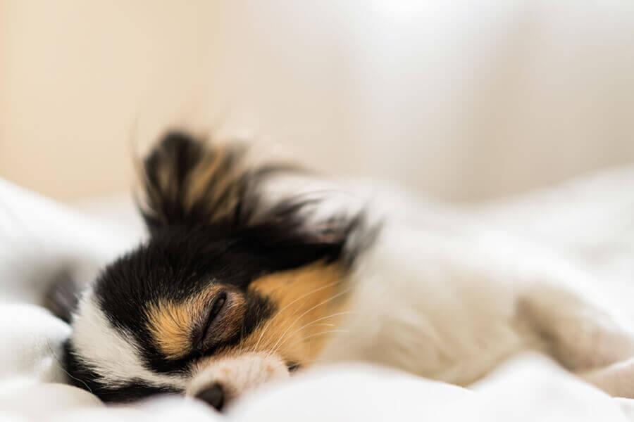 犬がいびきをかく原因は?犬がいびきをかく6つの理由と対処法