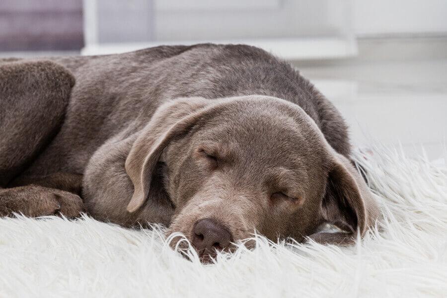 犬のいびきの仕組みとは