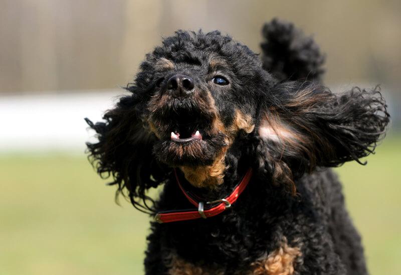 愛犬のしつけ「犬が吠える理由と無駄吠え対策」
