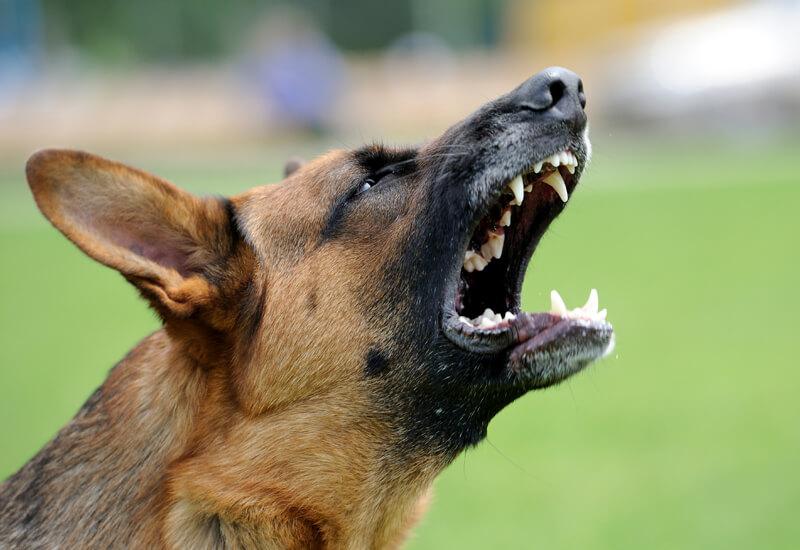 犬はなぜ吠えるのか