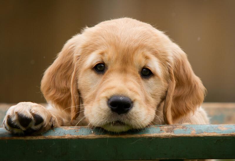 犬が吠える理由と吠え方の種類
