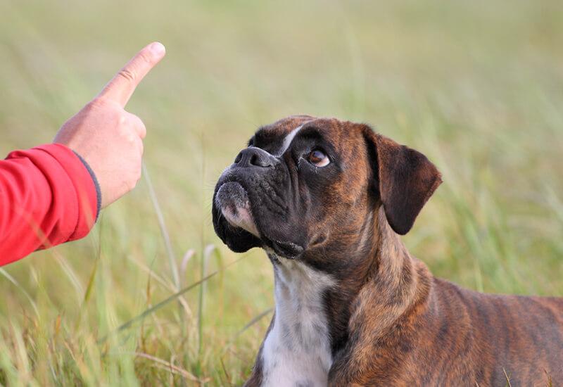 愛犬の吠え対策はその理由に応じた対策を