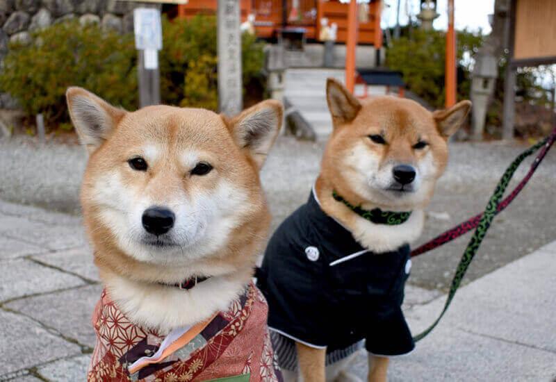 愛犬と一緒に初詣に行こう!犬同伴OKな神社、お寺一覧と犬連れ初詣の注意点
