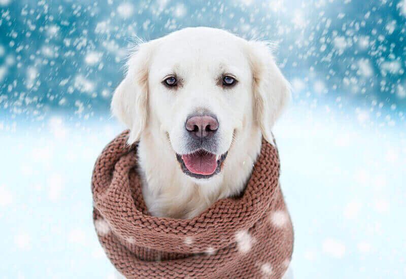 犬の体感温度には4つの要素が関わっている