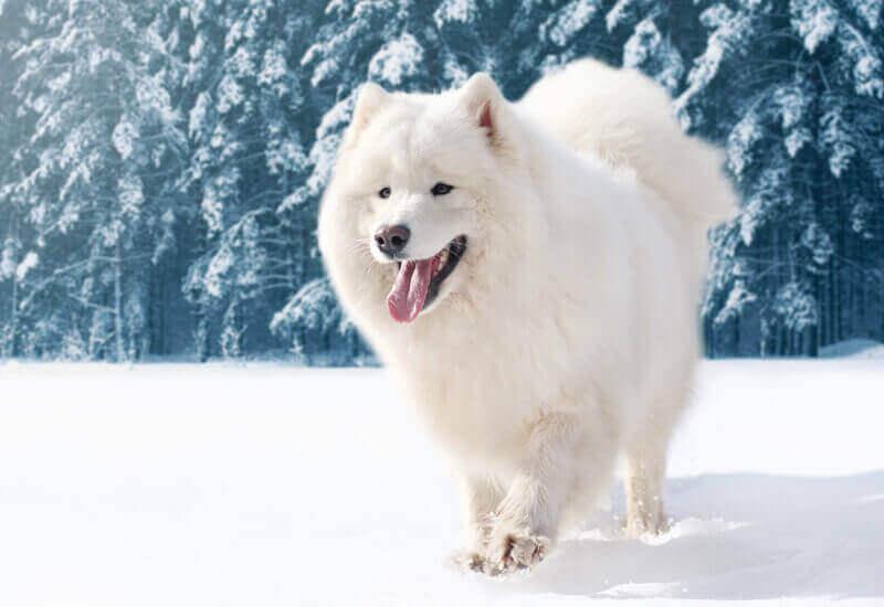 ダブルコートで長毛の犬は寒さに強い