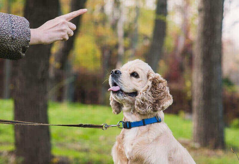 愛犬のしつけ「よく使うコマンド一覧と教え方」