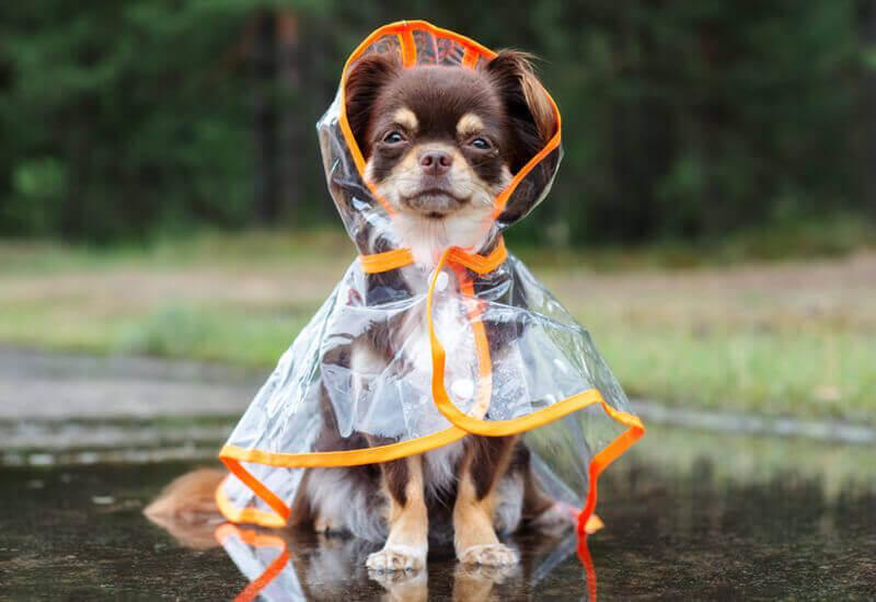 雨の日のお散歩はどうする?おススメの過ごし方と散歩に行く時の注意点