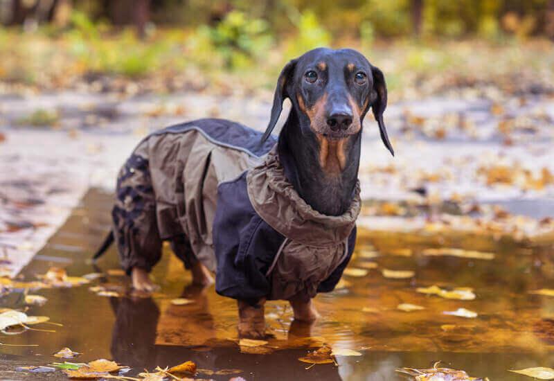 犬用のレインコートで体温低下を予防しよう