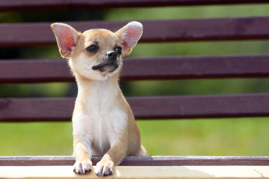 小型犬に多い「水頭症」