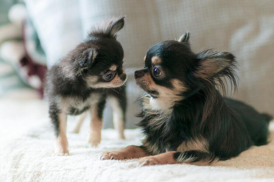 子犬やシニア犬にも多い「低血糖」