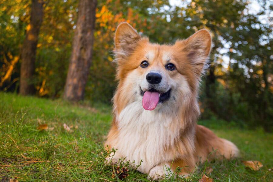 人のインフルエンザウイルスは犬には感染らない