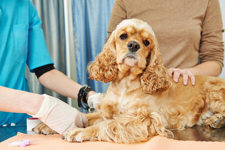 日本ではまだ感染が確認されていない犬インフルエンザ