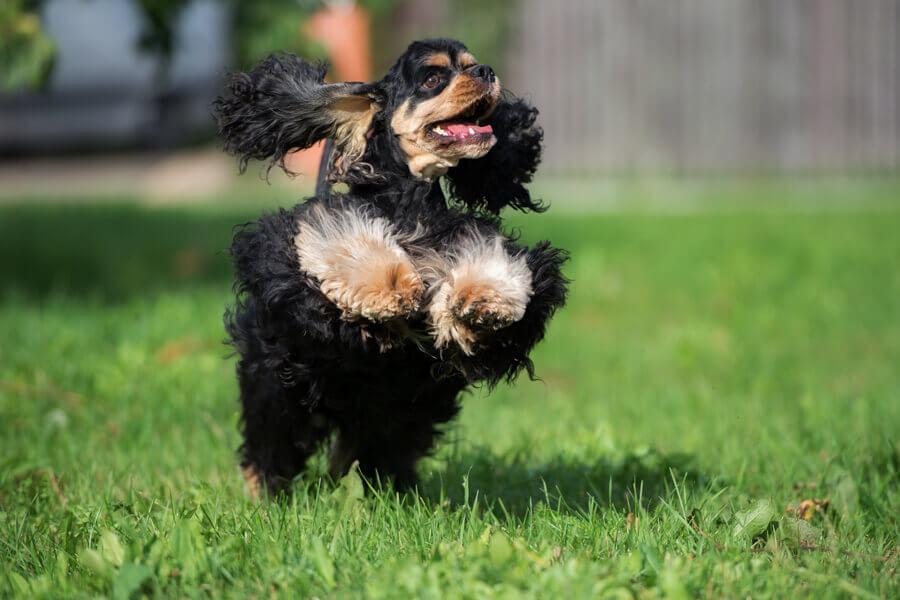 犬インフルエンザによく似た病気「犬パラインフルエンザ」とは