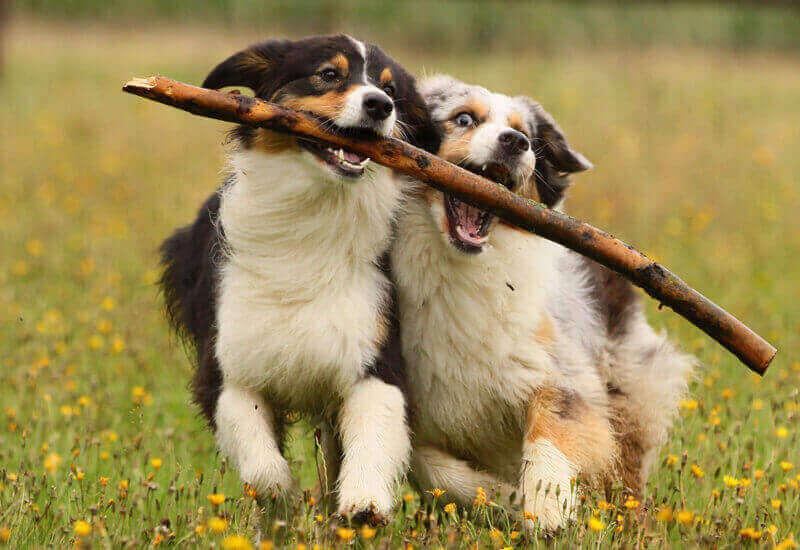 犬にとって甘噛みは自然な行動