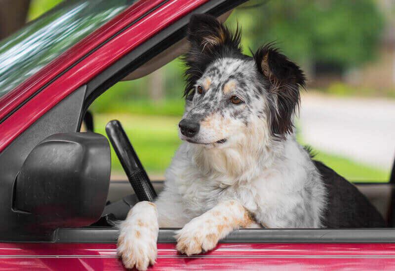 お出かけのコツ!愛犬とのドライブで気を付ける5つのポイント