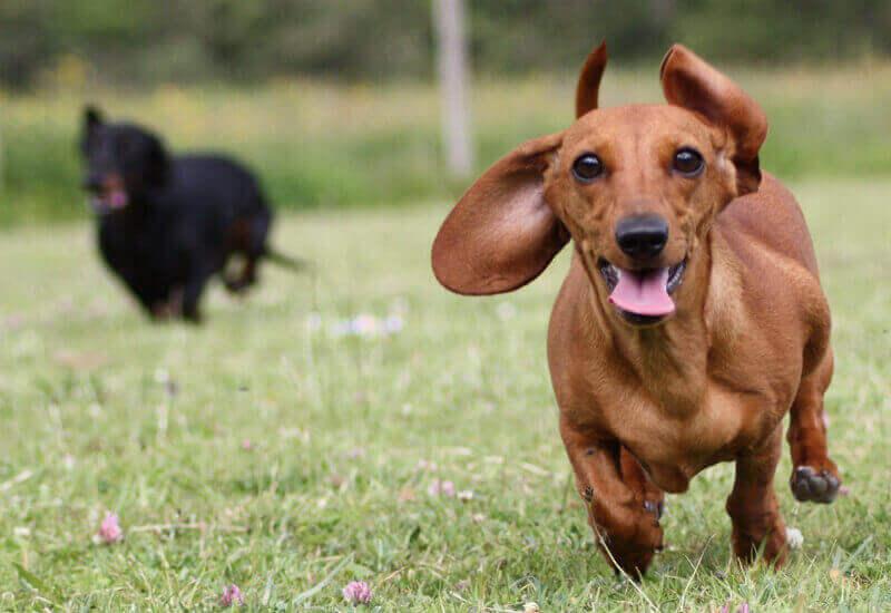 シャンプーは犬の肌質によって使い分けよう
