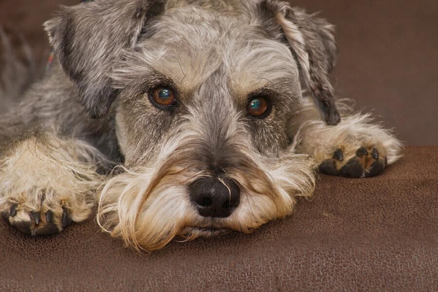 愛犬のしゃっくりが止まらない!犬のしゃっくりの原因と効果的な止め方について