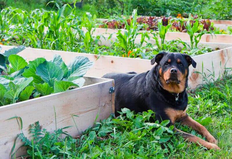 愛犬にも旬の食材を!犬が食べて良いものと食べてはいけないもの【春の果物・野菜編】