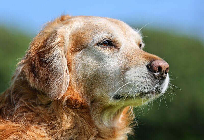 散歩コースや距離は愛犬の様子に合わせて