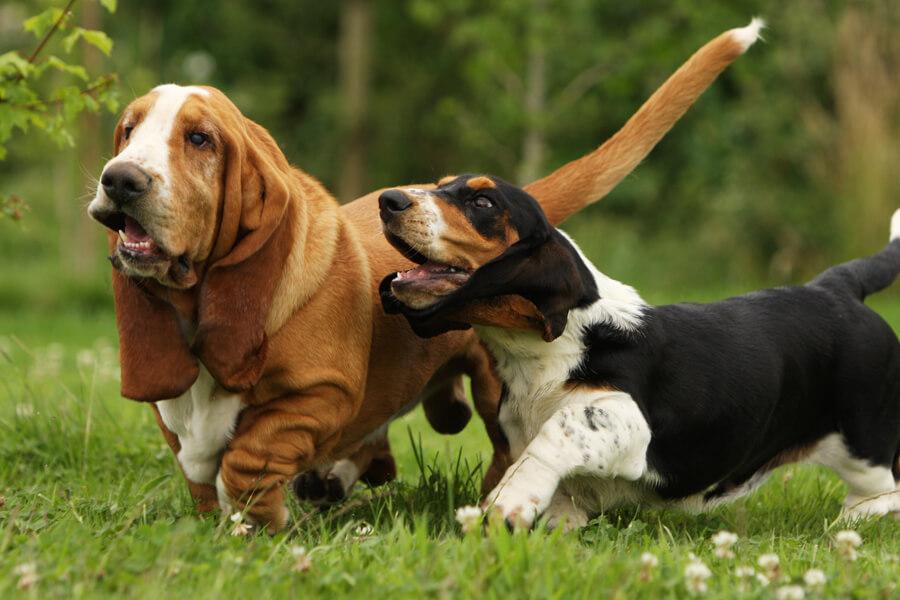 犬にも花粉症がある!?くしゃみや鼻水など犬の花粉症の症状や対策方法について