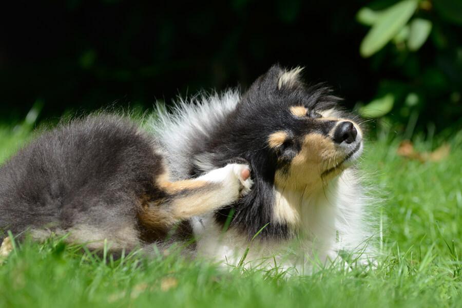 犬の花粉症について