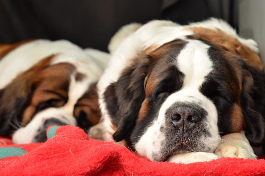愛犬の熱中症対策にはどんなものがある?