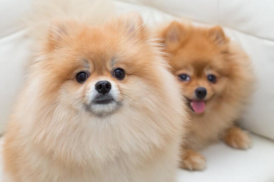 遺伝性・犬種特有の皮膚病