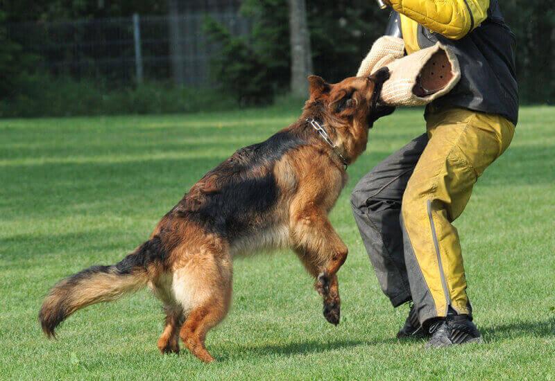 ワーキングドッグの分類②【警察犬グループ】