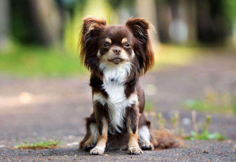 嘱託警察犬は指定犬種以外でもOK
