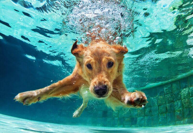 犬と遊べるスポット10選【関東近郊編】休日は愛犬と思いっきり楽しもう!