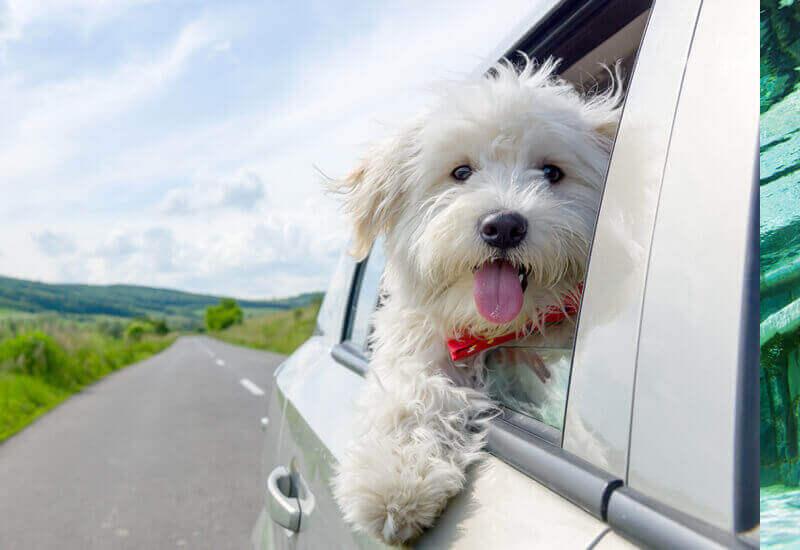 愛犬との休日は近場でも十分楽しめます!