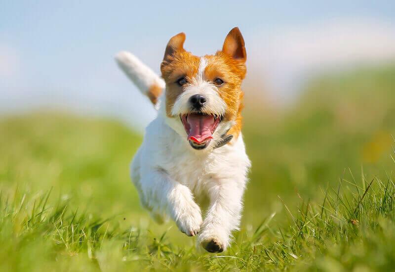 犬と遊べるスポット6選【東京都内編】休日は愛犬と思いっきり楽しもう!