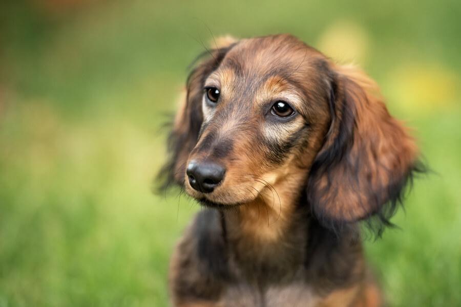 犬のフィラリア予防はいつからいつまで?フィラリア対策の基礎知識と対策期間について