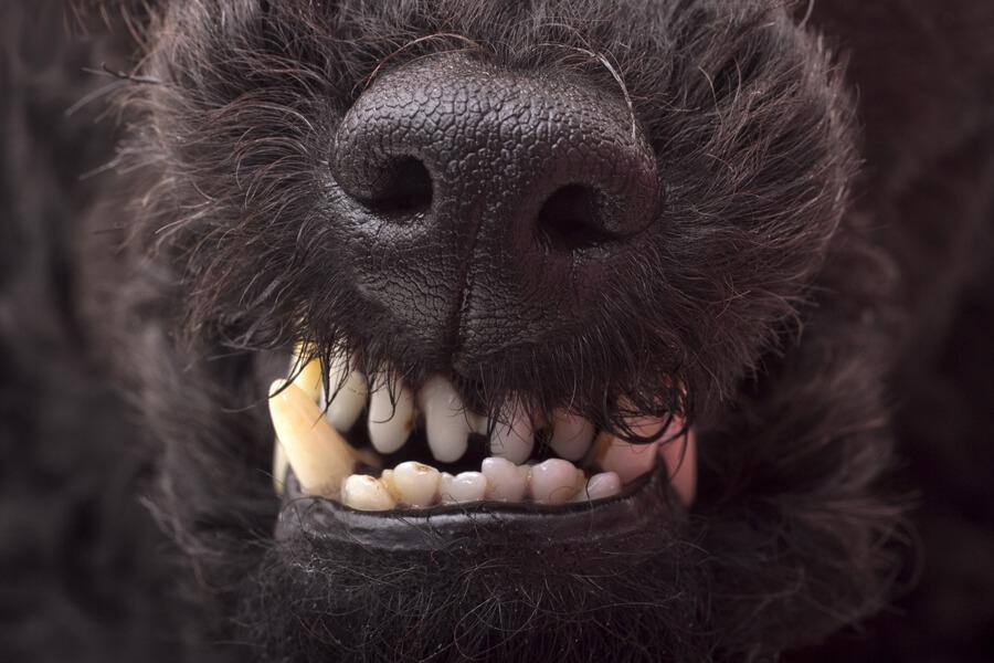 狂犬病予防接種徹底ガイド!注射の時期や費用、注射の副作用や注意点について