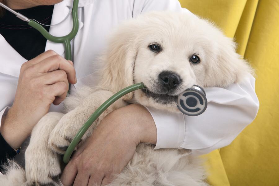 予防接種の副作用にはどんなものがある?