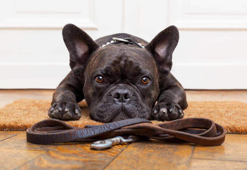 マナーを守って愛犬と散歩を楽しもう!散歩に必ず必要なものとあると便利なおすすめグッズ13選